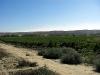 Finca Laraques välskötta vinodlingar.