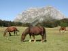 Hästar rör sig runt i landskapet.