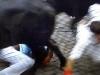 Många skador uppstår när tjurrusarna trillar och blir trampade på av tjurarna
