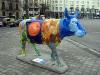 Samma ko i helbild. Fotad vid Plaza de Neptuno den 30 januari.