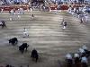 Så har tre av tjurarna kommit in på arenan, fortfarande saknas tre stycken