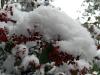 På ett par timmar är allt täckt med snö...