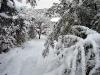 Jag har aldrig sett så mycket snö i Madrid.